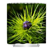 Love-in-the-mist Shower Curtain