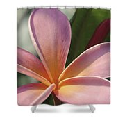 Love Is The Beauty Of The Soul  Shower Curtain
