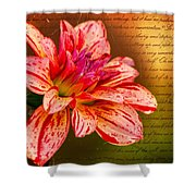 Love Letter To Dahlia Shower Curtain