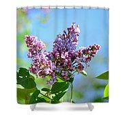 Love My Lilacs Shower Curtain by Lori Tambakis