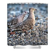 Love Peck Shower Curtain