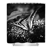 Eclectus Parrot  - Eclectus Roratus Shower Curtain