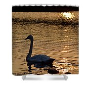 Love Will Lead You Back Shower Curtain