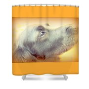 Who Will Love Me Forever When You Are Gone  Shower Curtain