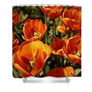 Lovely Burnt Orange Tulips Shower Curtain