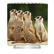 Lovely Group Of Meerkats Shower Curtain