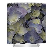 Lovely In Blue And White - Hydrangea Shower Curtain