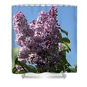 Lovely In Lilac Shower Curtain