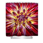Lovely In Purple And Red - Dahlia Shower Curtain