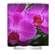 Lovely In Purple - Orchids Shower Curtain