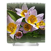 Lovely In White And Yellow - Tulips Shower Curtain