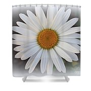 Lovely In White - Daisy Shower Curtain