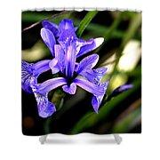 Lovely Iris Shower Curtain