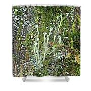 Lovely Lichens Shower Curtain