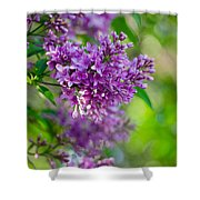 Lovely Lilacs Shower Curtain
