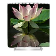 Lovely Lotus Reflection Shower Curtain