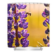 Lovely Lupins And Busy Bee Shower Curtain