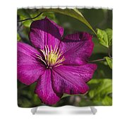 Lovely Magenta Pink Clematis Blossom Shower Curtain