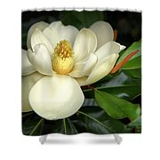 Lovely Magnolia Shower Curtain