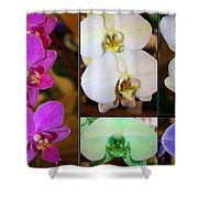 Lovely Orchids - A Collage Shower Curtain