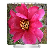 Lovely Peony Shower Curtain