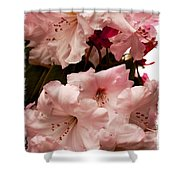 Lovely Pink Rhododendrons With Border Shower Curtain