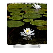Lovely Pond Lily Shower Curtain