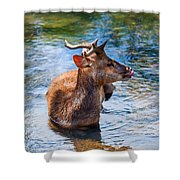 Lovely Time In Water.  Male Deer In The Pampelmousse Botanical Garden. Mauritius Shower Curtain by Jenny Rainbow
