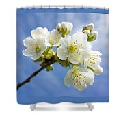 Lovely White Apple Blossoms On Branch Shower Curtain