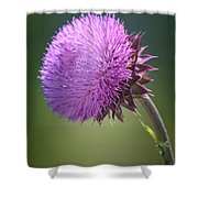 Loving Lavender Shower Curtain