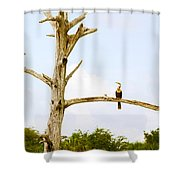 Low Angle View Of Cormorants Shower Curtain