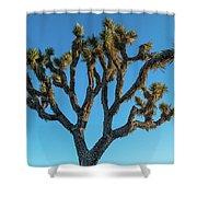 Low Angle View Of Joshua Tree, Joshua Shower Curtain