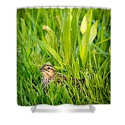 Low Profile Shower Curtain