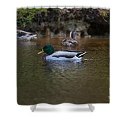 Lowcountry Duck Gathering Shower Curtain