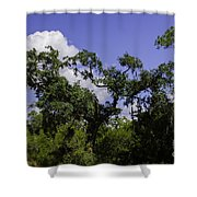 Lowcountry Life Oaks Shower Curtain