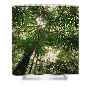 Lowland Tropical Rainforest Fan Palms Shower Curtain