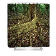 Lowland Tropical Rainforest Shower Curtain