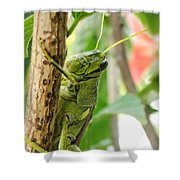 Lubber Grasshopper Squared Shower Curtain