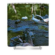 Lucky Ducks Shower Curtain