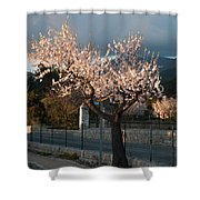 Luminous Almond Tree Shower Curtain