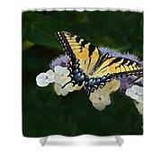 Luminous Butterfly On Lacecap Hydrangea Shower Curtain