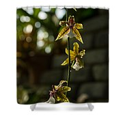 Luminous Chain Of Orchids Shower Curtain