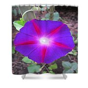 Luminous Morning Glory In Purple Shines On You Shower Curtain