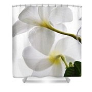 Luminous Plumeria Shower Curtain
