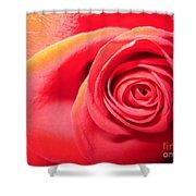 Luminous Red Rose 1 Shower Curtain