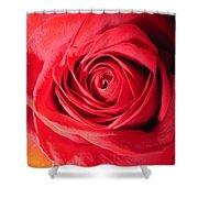 Luminous Red Rose 7 Shower Curtain