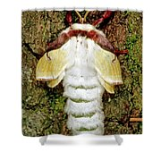 Luna Moth Actias Luna Shower Curtain