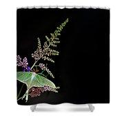Luna Moth Astilby Black Background Shower Curtain