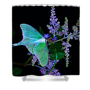 Luna Moth Astilby Flower Black Shower Curtain