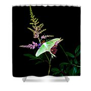 Luna Moth Astilby Flower  Shower Curtain